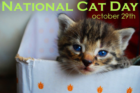 October 29 Is National Cat Day Myorthodontists Info