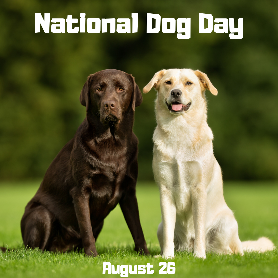 National Dog Day is August 26   Orthodontic Blog ...