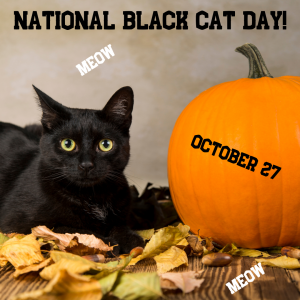 Meow! It's National Black Cat Day!