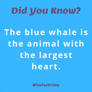 Did You Know? (Fun Fact Friday -1)