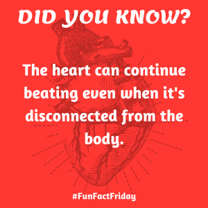 Did You Know? (Fun Fact Friday – 2)