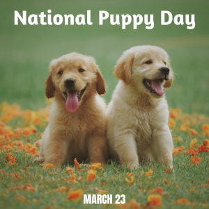 National Puppy Day is on March 23!