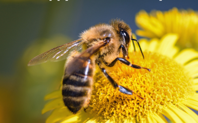 Save the Bees! – May 20
