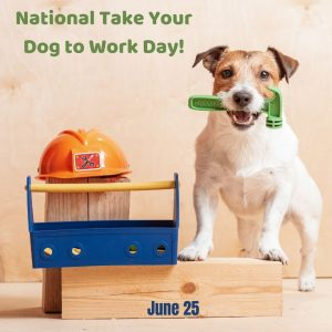 National Take Your Dog to Work Day 2021!
