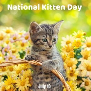 July 10 is National Kitten Day 2021!