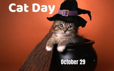 National Cat Day 2021! (Oct. 29)